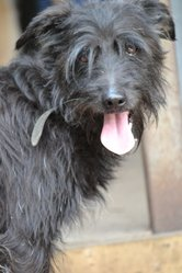 Маврик идеальная собака для семьи