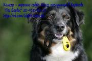 Кликер – тренинг собак. Класс послушания в Харькове. Пес Барбос
