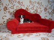 лежаки,  диваны,  ринговки для собак