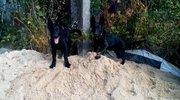 Черные щенки немецкой овчарки рабочего разведения