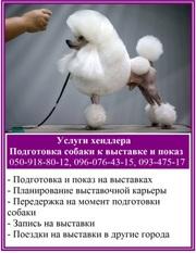 Услуги хендлера - показ собаки на выставке