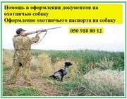 Оформление документов на охотничью собаку Охотничий паспорт на собаку